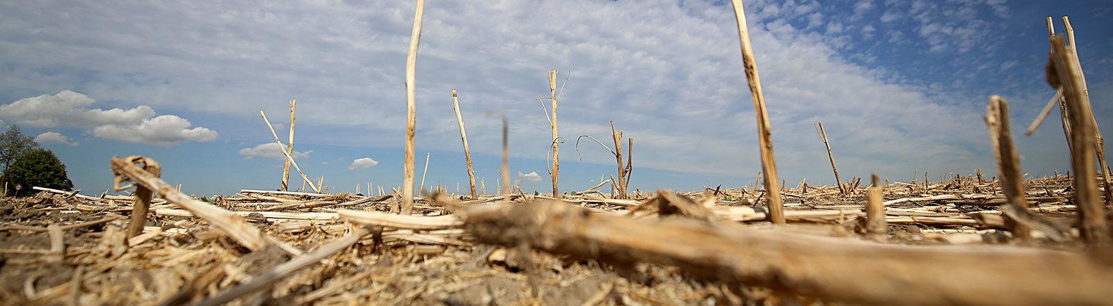 Ernteausfälle Trockenheit