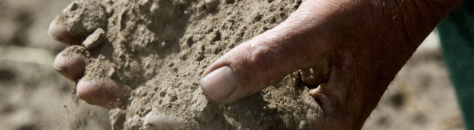 Den ausgetrockneten Boden zeigt ein Bauer der Ökogärtnerei Am Bauerngut am 05.06.2008 im brandenburgischen Libbenichen (Märkisch-Oderland). Seit etwa drei Wochen hat es im Osten von Brandenburg nicht mehr geregnet.