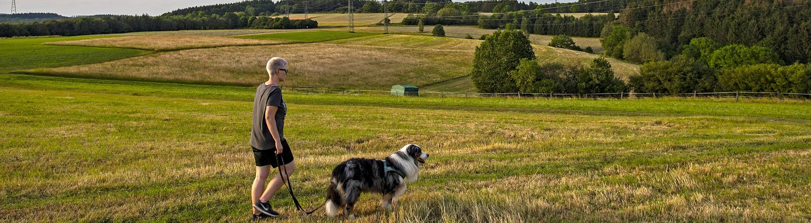 Sommer im Siegerland, Landschaft bei Siegen-Oberschelden an einem lauen Sommerabend, eine Frau geht mit ihrem Hund spazieren