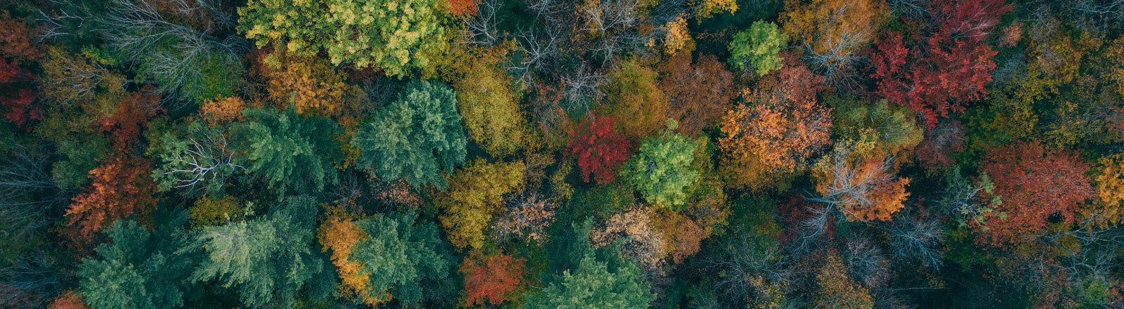Herbstwald aus der Vogelperspektive.