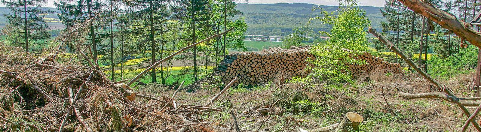 Fichtenwald Ein Fichtenwald mit vielen umgeknickten Bäumen. Hier in der Gemarkung Hachmuehlen im Deister bei Hameln am 29.04.2007.
