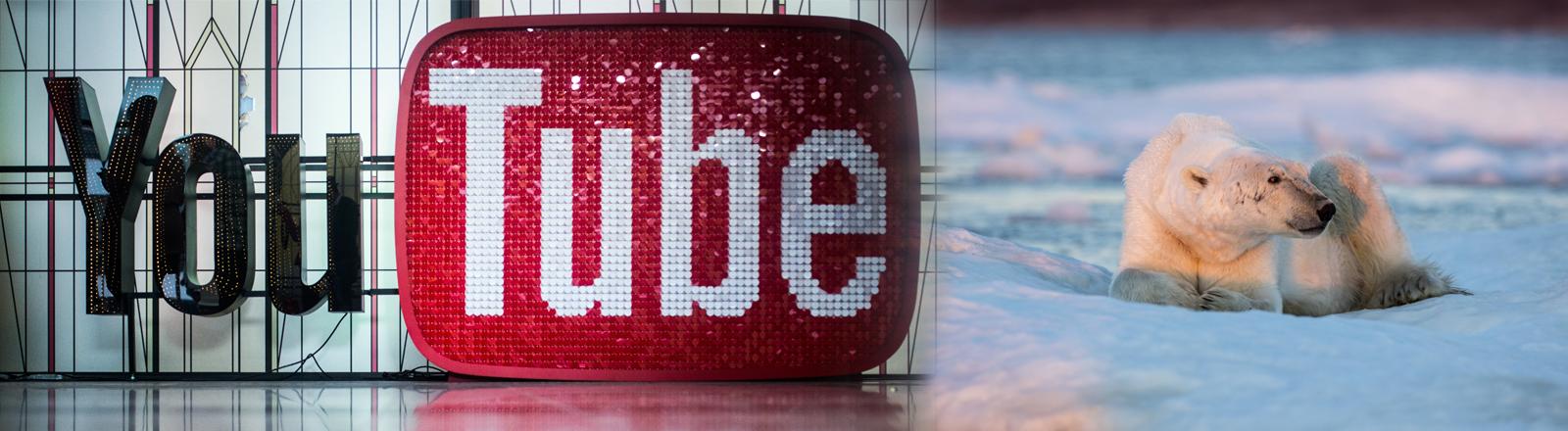 Das Logo von Youtube, davor als Collage ein sehr dünner Eisbär