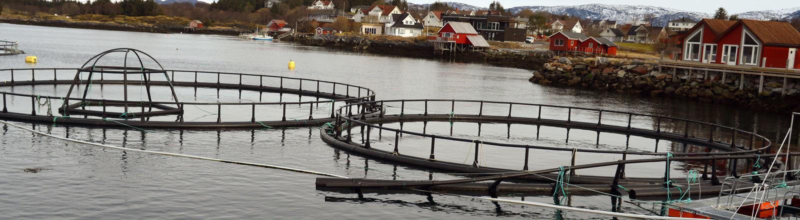 Blick auf eine Lachszucht in einem Fjord in Tofte bei Brønnøysund, Norwegen; Foto: dpa