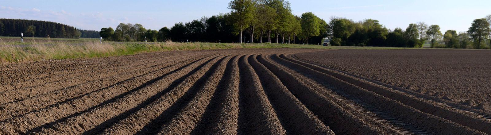 Frisch präparierter Kartoffelacker bei Waal im Allgäu. Der Boden ist extrem trocken durch den fehlenden Regen in diesem Frühjahr (29.04.2020).