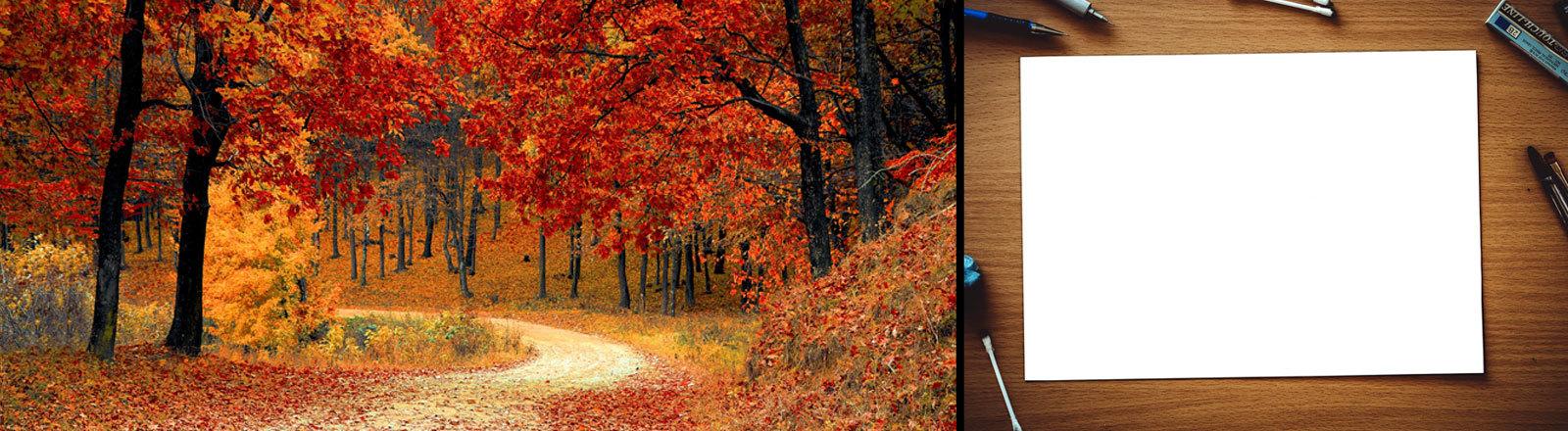Links: Ein Herbstwald. Rechts: Ein Blatt Papier