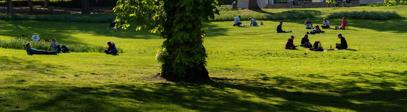 Stadtpark mit Baum