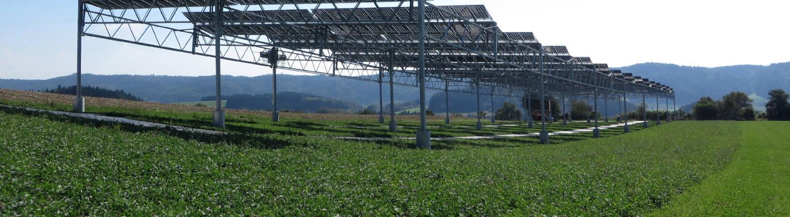 Eine Agri-Photovoltaik-Anlage auf einem Feld