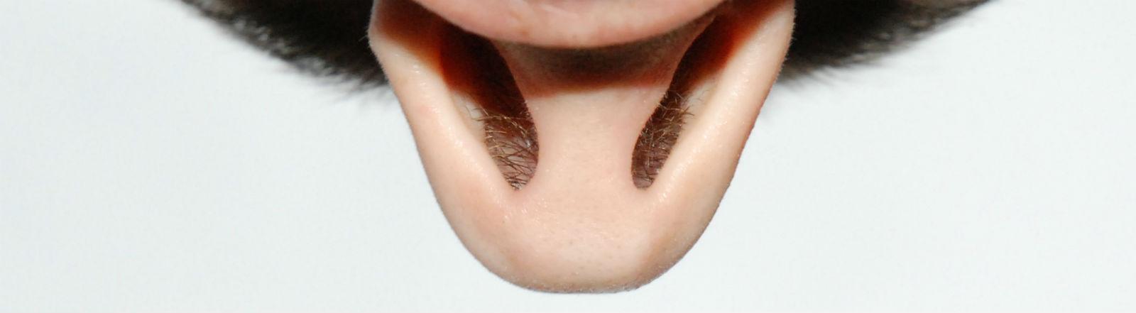Eine Nase von unten in Großaufnahme.