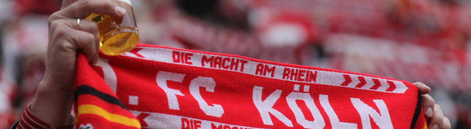Fan des 1. FC Köln mit Schal und Bier
