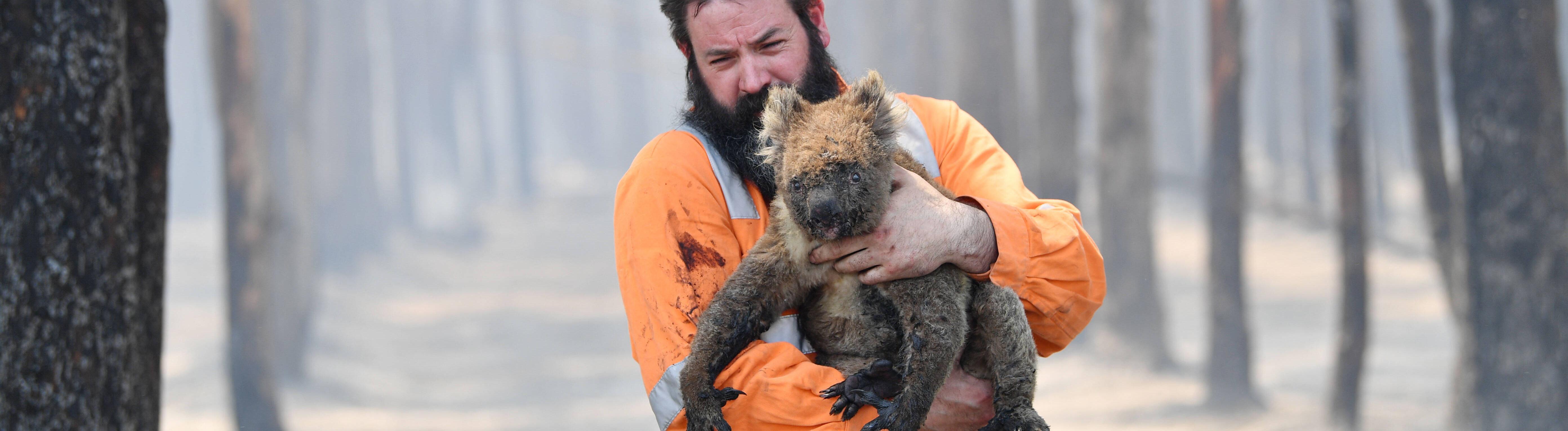 Ein Mann hält im verbrannten Wald einen Koala auf dem Arm