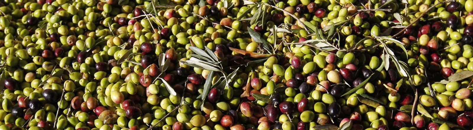 Oliven, in diesem Fall allerdings aus Südfrankreich...