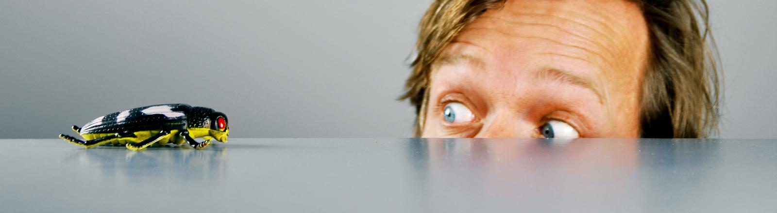 Ein Mann blickt auf eine Schabe