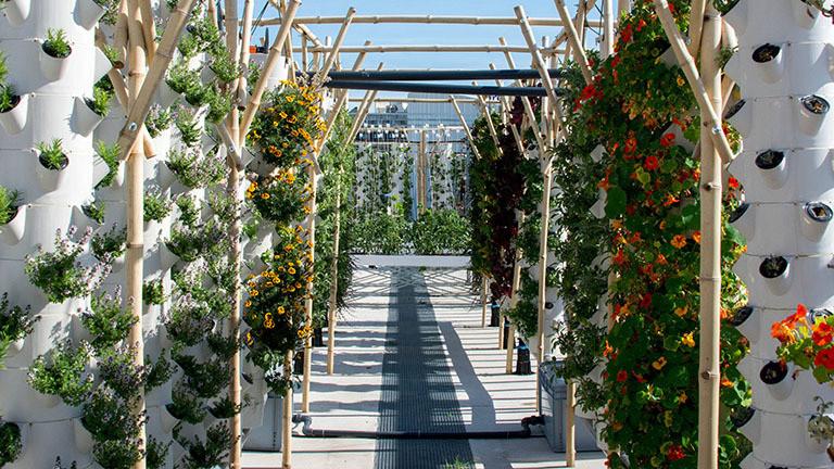 Auf einem Dachgarten stehen Reihen weißer Säulen mit Öffnungen, aus denen Pflanzen wachsen. Dieses vertikale Farming gehört zum Projekt NU-Paris (23.06.2020).