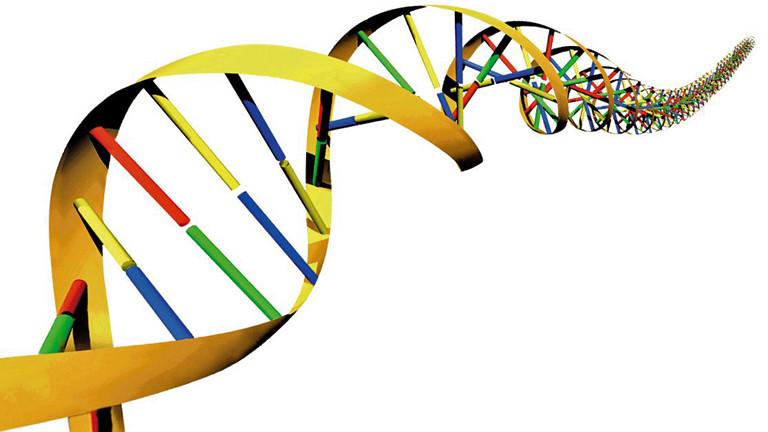 DNA-Studie entkräftet Doppelgänger-Theorie