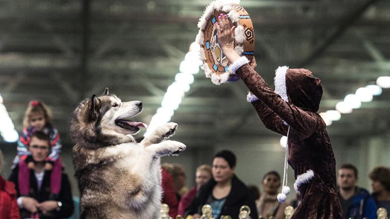 Szene von den internationalen Meisterschaften im Dog Dance in Moskau.