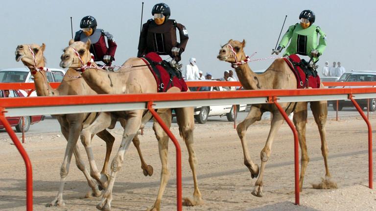 In Doha reiten Jockey-Roboter Kamele bei einem Rennen.
