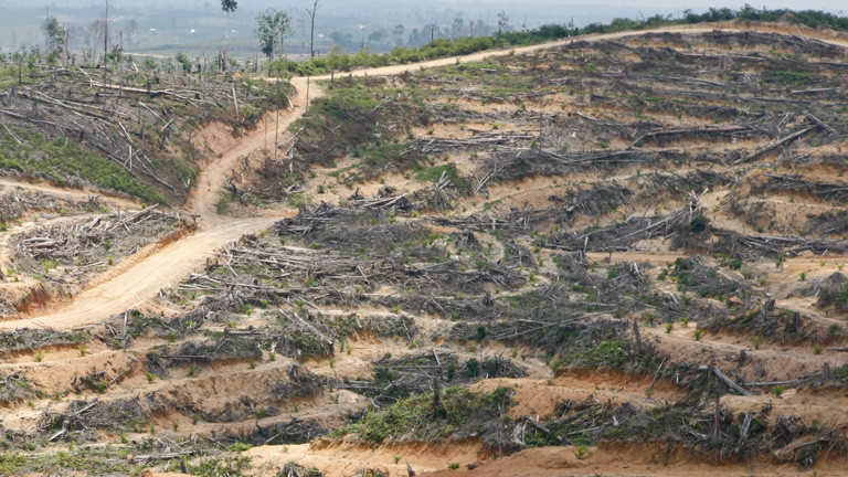 Abholzung wegen Palmöl bedroht auch Indigene