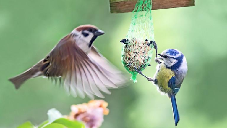Zwei Vögel an einer Futterstelle