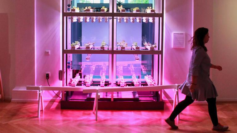 In einem gläsernen Schrank stehen Pflanzen. Es ist eine Indoor-Farm.