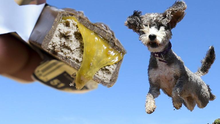 Ein Hund springt zu einem Mars-Riegel.
