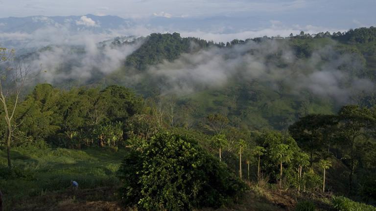 Blick auf eine Kaffeeplantage in Kolumbien. Dahinter Wald. In den Bäumen hängen Wolken. Am Horizont erheben sich die Anden.
