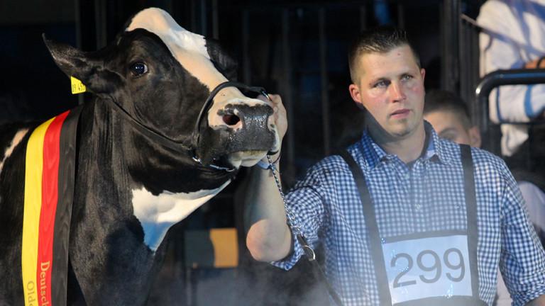 """Landwirt Henrik Wille und seine Kuh """"Lady Gaga"""" präsentieren sich am 11.06.2015 bei der Deutschen Holstein-Schau in Oldenburg (Niedersachsen) dem Publikum."""
