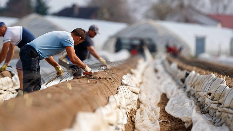 Auf einem Spargelfeld in Weiterstadt wird geerntet; die Männer, die ernten, sind rumänische Gastarbeiter (20.03.2020)