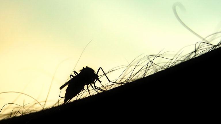 Mücke auf menschlichem Arm im Gegenlicht