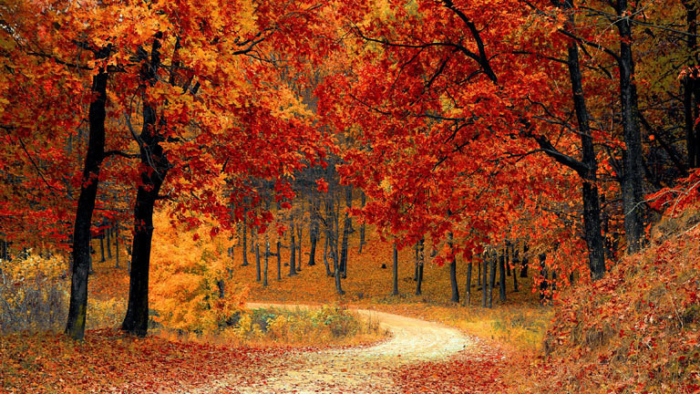 Ein Herbstwald