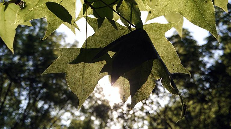 Sonnenlicht fällt durch die Blätter eines Baumes.