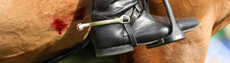Reiterstiefel mit Sporen, blutendes Pferd