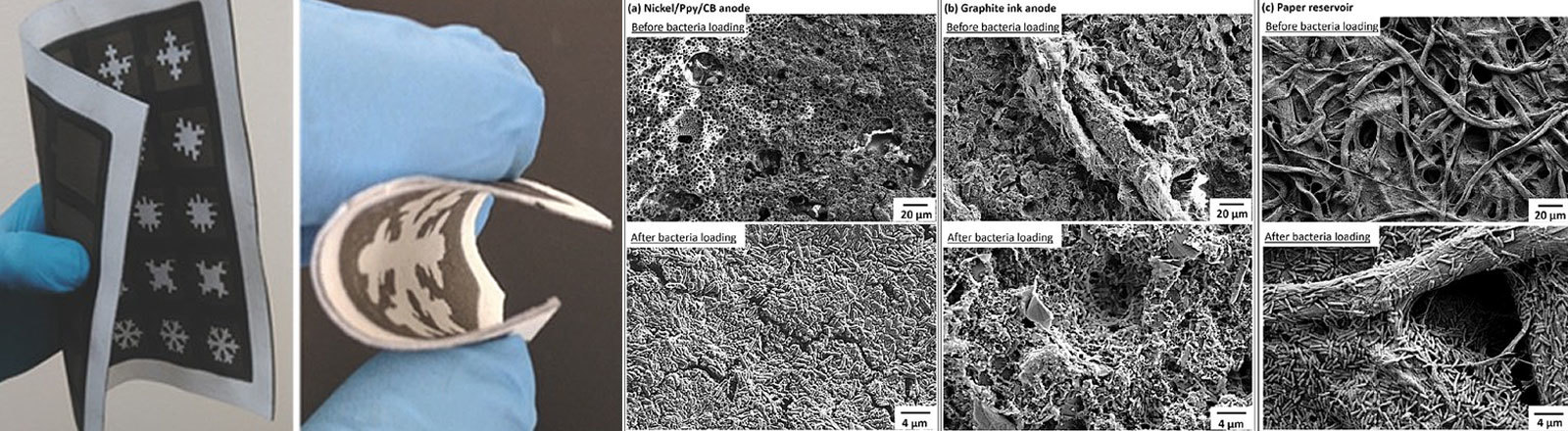 Batterien aus Papier und Bakterien, Grafik