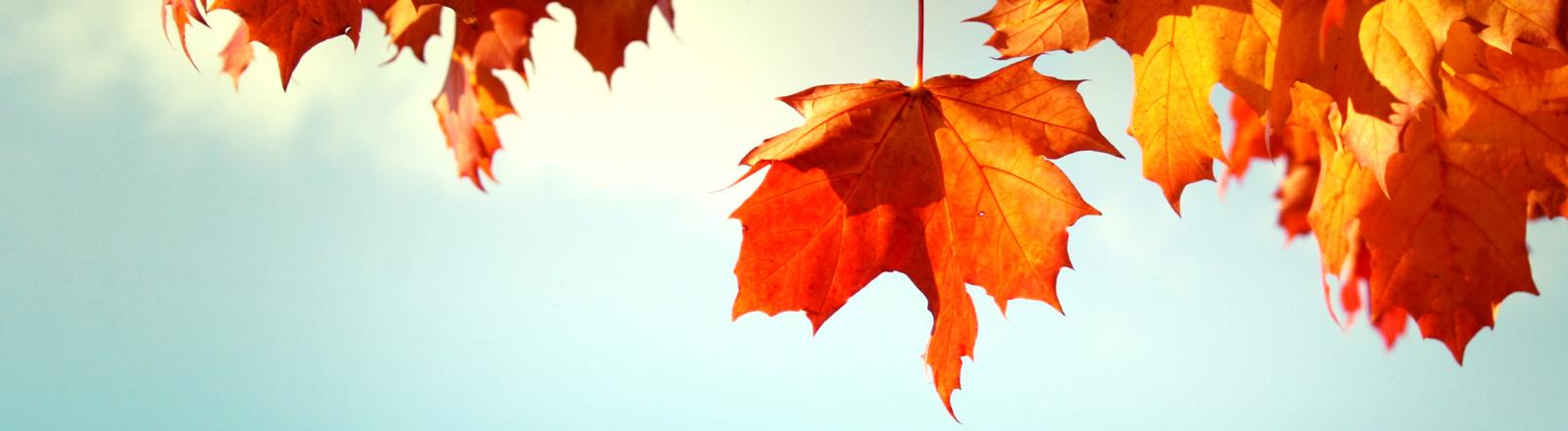 Buntes Herbstlaub vor blauem Himmel