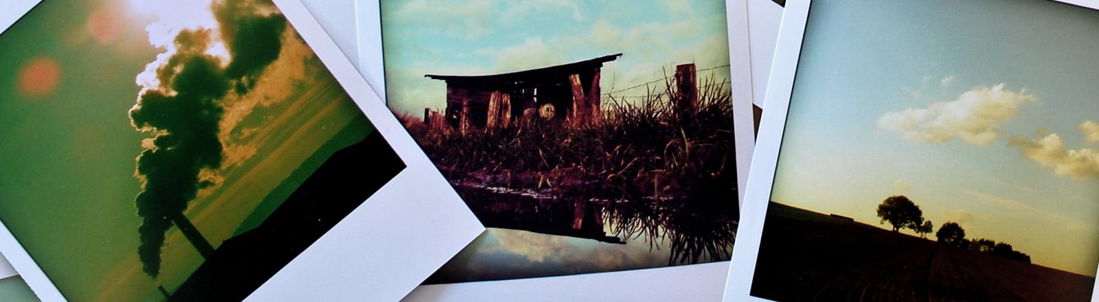 Polaroid-Fotos liegen kreuz und quer durcheinander