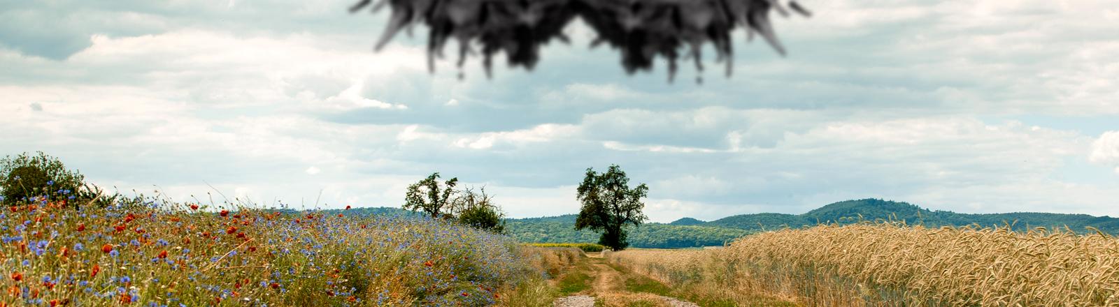 Bildkomposition mit zwei Kastanien im Vordergrund einer Landschaft