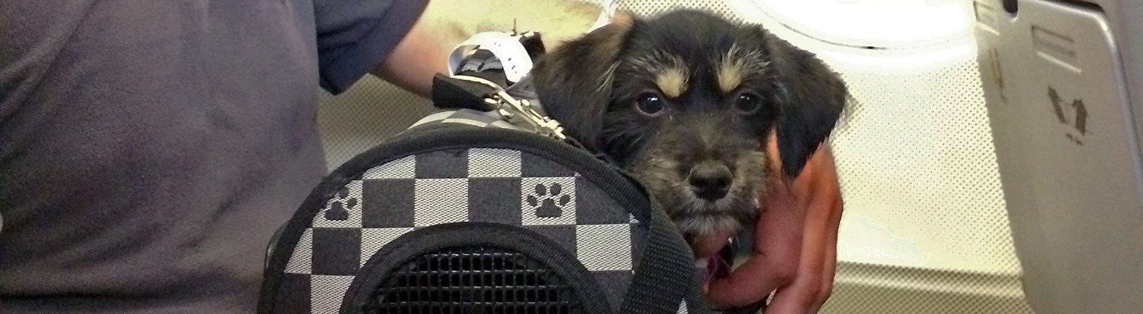Hund in Transportbox auf Schoss von Mann in Flugzeug