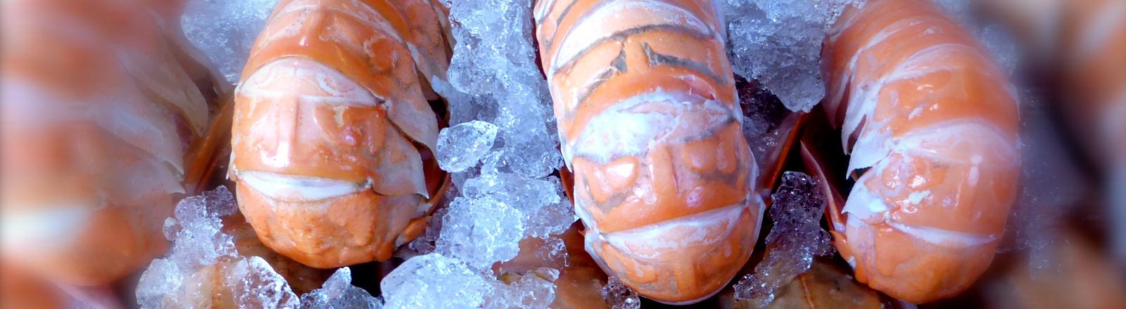 Scampi auf Eis