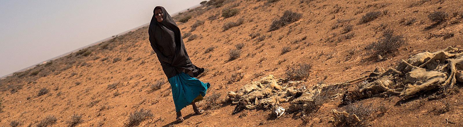 Saida Mousseh Mohammed Hassan und ihre toten Ziegen nahe dem Ort Uusgure im Nordosten Somalias