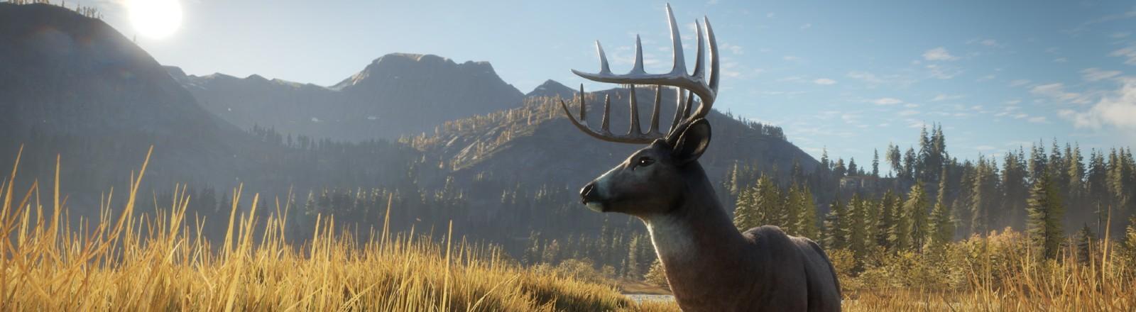 Ein Hirsch steht an einer schönen Lichtung
