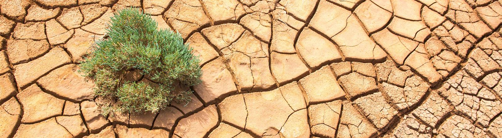 Ausgetrockneter Boden in Westaustralien