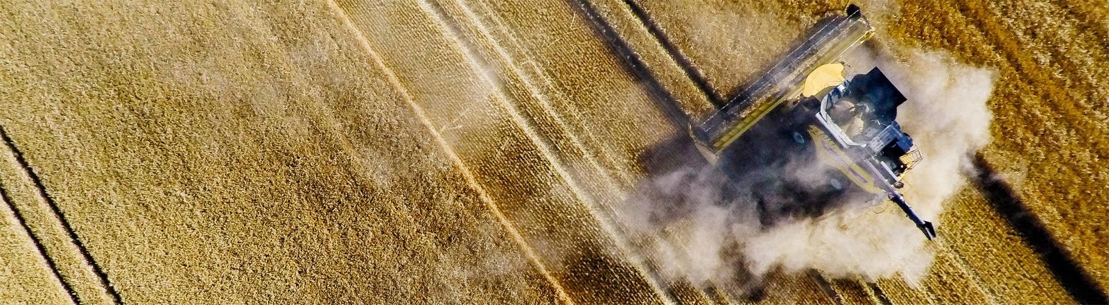 Früher, staubiger und weniger ertragreich als in den Jahren zuvor: Gersteernte auf einem Feld bei Erfurt im Juli 2018
