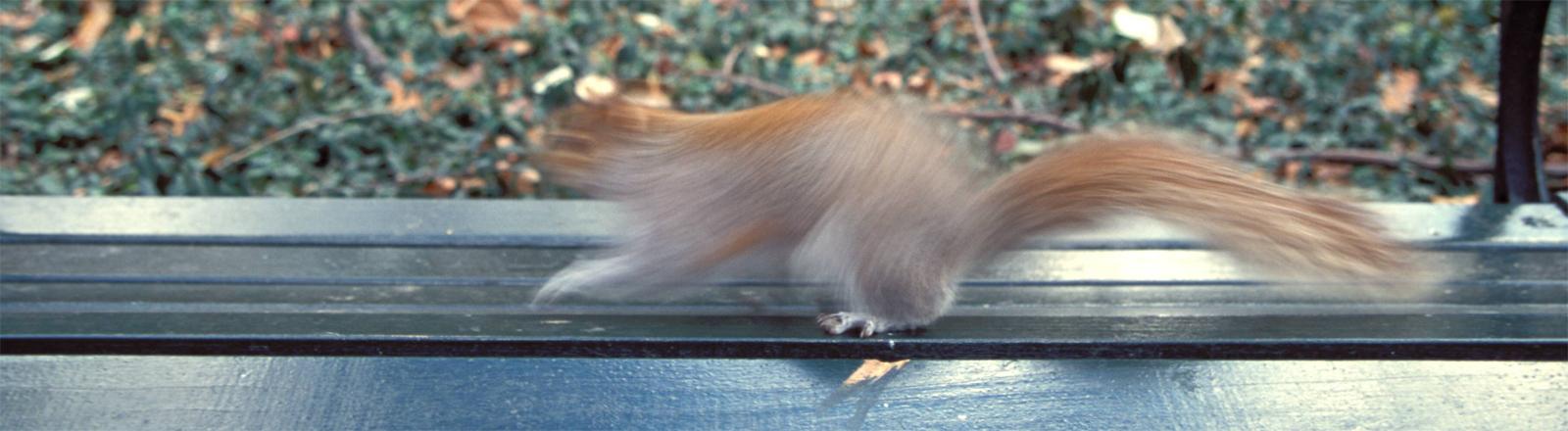 Eichhörnchen auf einer Parkbank im Central Park