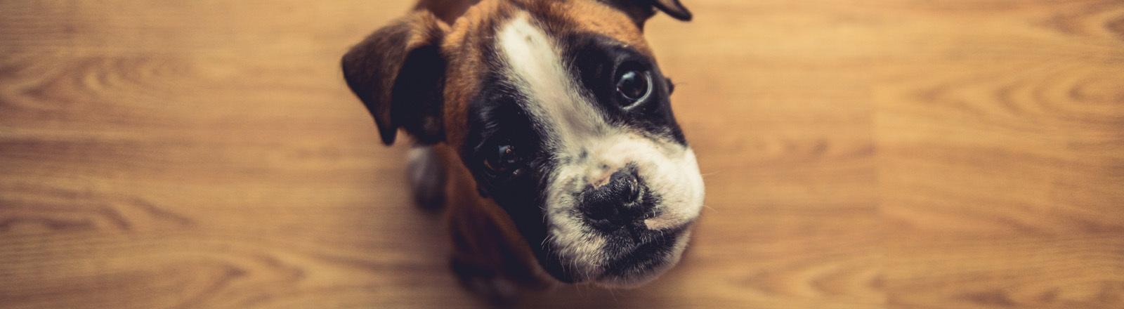 Hund schaut in die Kamera