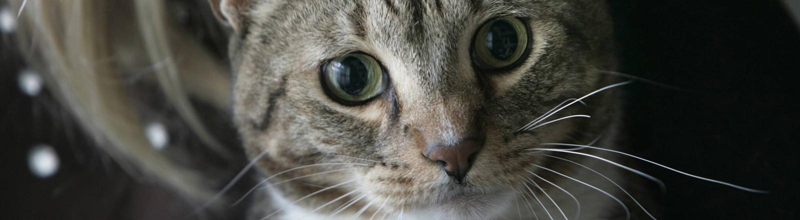Diese Katze hört auf den Namen Tiger. Das Foto entstand im  November 2007.