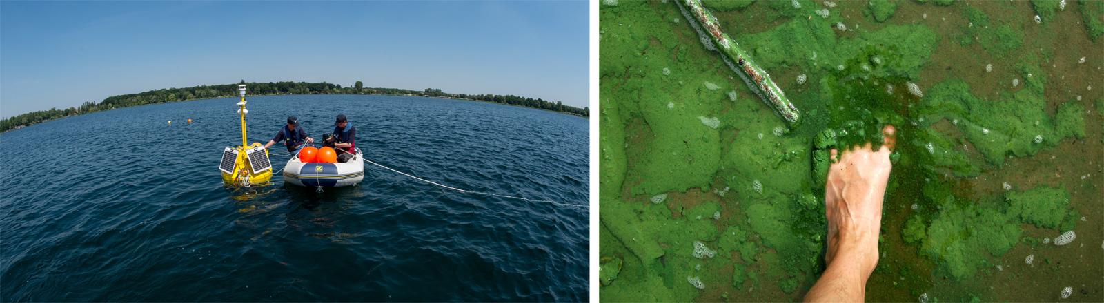 Messboje auf dem Barleber See (linke Seite) – Fuß in Blaualgen (rechte Seite)