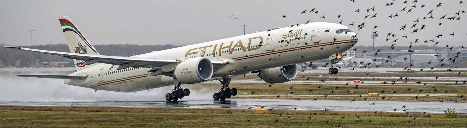 Gefährlicher Schwarm: Flugzeug beim Start vom Frankfurter Flughafen