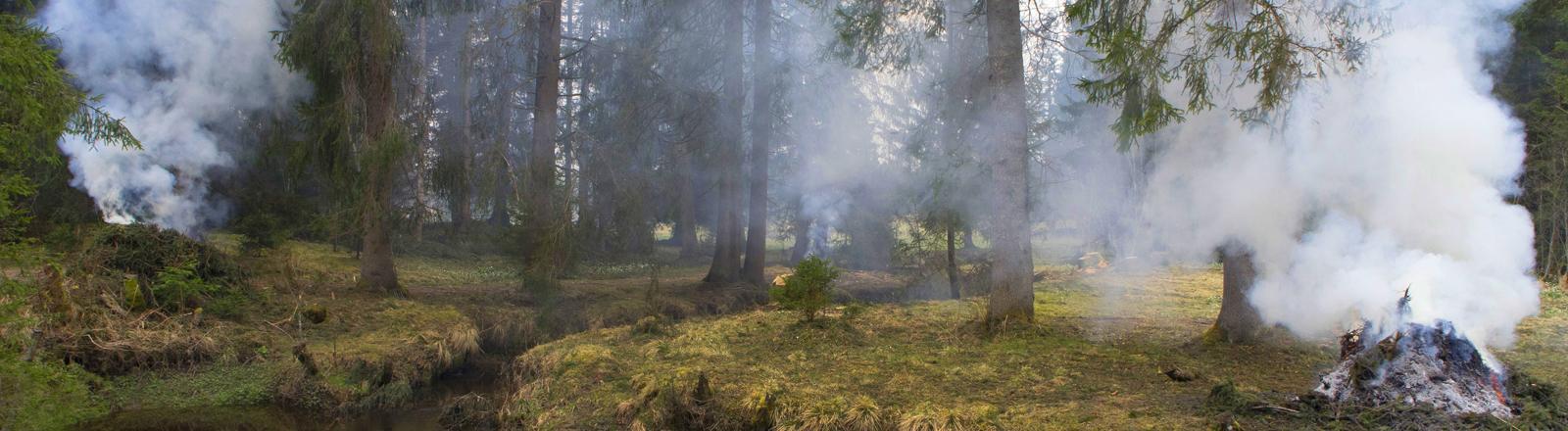 Rauchschwaden im Wald.