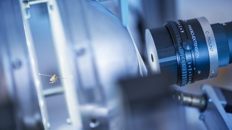 Insekt in Lichtkugel, trifft Kamera: Detailansicht des Scanners