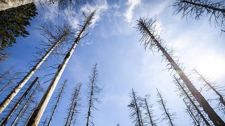 Waldsterben 2017 aufgrund des Klimawandels, Hitze und Trockenperioden, Vermehrung des Borkenkäfers