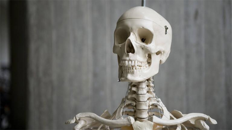 Modell eines menschlichen Skeletts aufgenommen in Berlin im Jahr 2014
